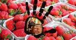 Πατούλη στάσου φράουλες. Σε Γενικές Γραμμές. Η Non Playlist Της Επικαιρότητας #17